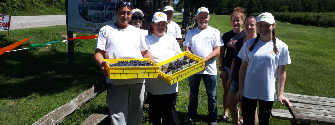 gleaners picking blueberries